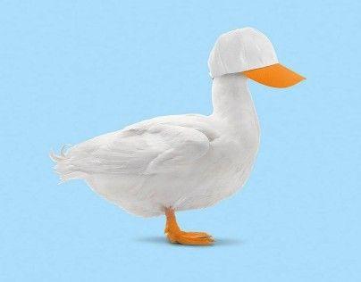 کلاه و اردک